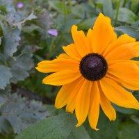 Солнышко августа. :: zoja