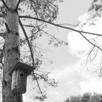 Птичий дом :: trutatiana .