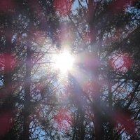 солнце :: константин