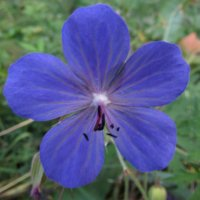 цветок :: константин