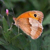 Бабочка :: Фарит