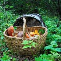 Лесные дары. :: Маргарита ( Марта ) Дрожжина