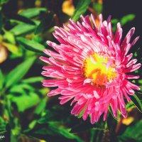 цветок :: Геннадий Чуган