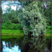 На реке Пскове. 14.08.2015. :: Fededuard Винтанюк