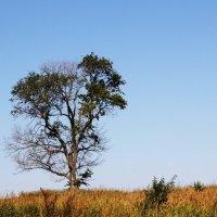 Пейзаж с деревом :: Damir Si