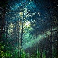 Луч солнца в сосновом лесу. :: Екатерина Дроздова