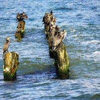 Природа Балтийское море. :: Murat Bukaev