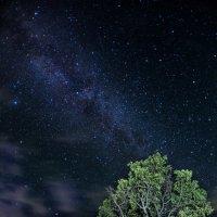 Деревья тоже любят смотреть на звезды :: Сергей Урунбаев