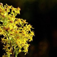 Жёлтенький цветочек :: Владимир Гилясев