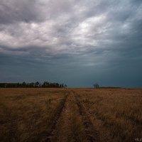 поле :: Павел Пироговский