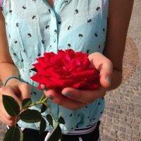 Троянда :: Оля Пилькевич