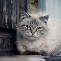 Cat :: Яна Евсеенко