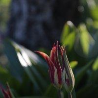 Цветочный хоровод-473. :: Руслан Грицунь