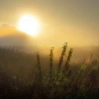 Рассветы августа...2 :: Андрей Войцехов