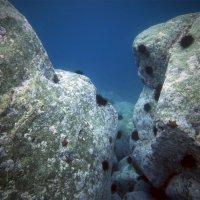 Ворота в магию подводного мира :: Boris Khershberg