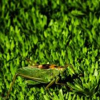 Зеленый на зеленом. :: Андрей Боталов