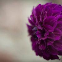 flower :: Таня Свирид
