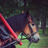 Horses :: Татьяна Пилипушко