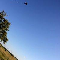Воздушного змея учу я летать :: Анна Рид