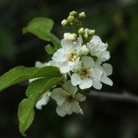 Цветы :: Татьяна Грищук