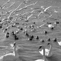 Птицы :: Sergey K