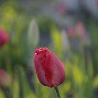 Цветочный хоровод-479. :: Руслан Грицунь