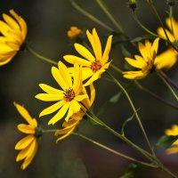 Осенние цветы :: Анатолий Иргл