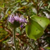 цветок и бабочка :: Елена