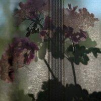 цветы на окне :: Лариса *