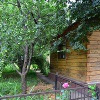 Кусочек деревни в Москве. :: Oleg4618 Шутченко