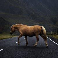 Horse :: Василий К