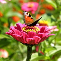 Бабочка и цветок :: Александр Попов