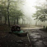 В парке :: Леонид Сергиенко