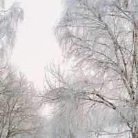 Тропинка :: Николай Полыгалин