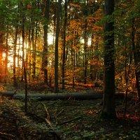 Сказки утреннего леса :: Alexander