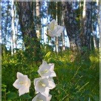 У леса на опушке... :: Эля Юрасова