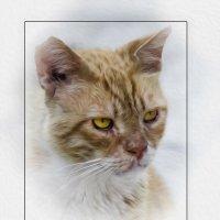 Портрет гуляки-из серии Кошки очарование мое! :: Shmual Hava Retro