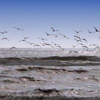 Море и чайки ... :: Фарит