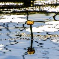 На лесном озере :: Ivan Lukkonen