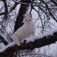кошка Белка :: владимир володенок