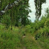 Лесная дорожка :: Дмитрий Конев