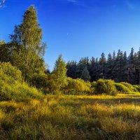 У кромки леса :: Андрей Дворников