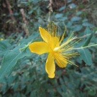 прекрасный цветок :: tgtyjdrf