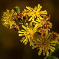 Желтые цветы :: Андрей Дворников