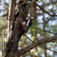 Стук в лесу :: Анастасия Дрожжачих