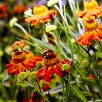 В саду... :: Viktor Nogovitsin