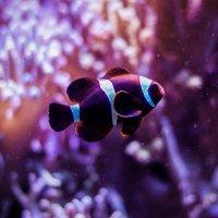 Рыбка :: Элла Мережская