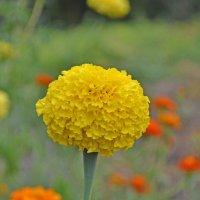 Цветок :: Sosed_5442 Полтавец Александр