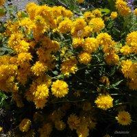 Полегли от тяжести цветочки. :: Антонина Гугаева