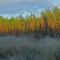 белые травы :: Елена
